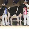 Royal16_Holstein_L32A3798