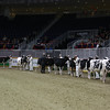 Royal16_Holstein_L32A3804