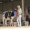 Royal16_Holstein_L32A3599