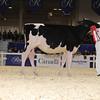 Royal16_Holstein_1M9A9671