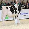 Royal16_Holstein_L32A3559