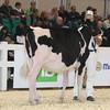 Royal16_Holstein_L32A3720