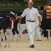 Royal16_Holstein_L32A3589