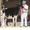 Royal16_Holstein_L32A3713