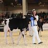 Royal16_Holstein_1M9A9666