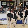 Royal16_Holstein_L32A3739