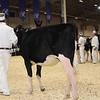 Royal16_Holstein_1M9A9641