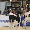 Royal16_Holstein_L32A3740