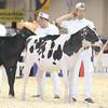 Royal16_Holstein_L32A3595