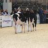 Royal16_Holstein_L32A3653