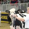 Royal16_Holstein_L32A3814