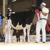 Royal16_Holstein_L32A3714