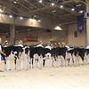 Royal16_Holstein_1M9A9591