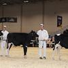 Royal16_Holstein_1M9A9687
