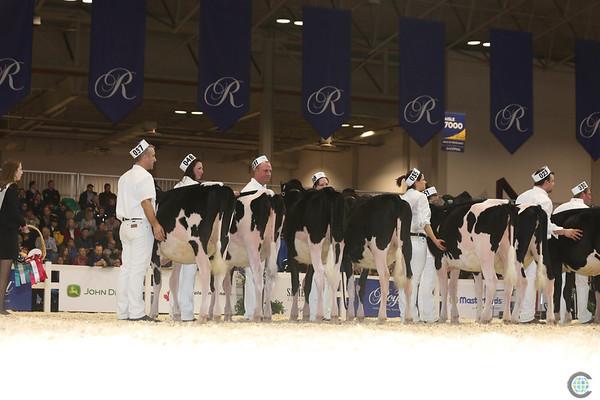 Royal16_Holstein_L32A3692