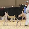Royal16_Holstein_L32A3788