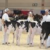 Royal16_Holstein_L32A3582