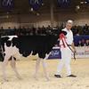 Royal16_Holstein_1M9A9669