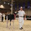 Royal16_Holstein_1M9A9554