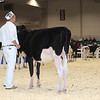 Royal16_Holstein_L32A3640