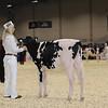 Royal16_Holstein_1M9A9509