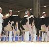 Royal16_Holstein_L32A3669