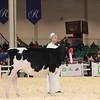 Royal16_Holstein_1M9A9679