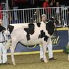 Royal16_Holstein_1M9A9861