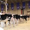 Royal16_Holstein_1M9A9598