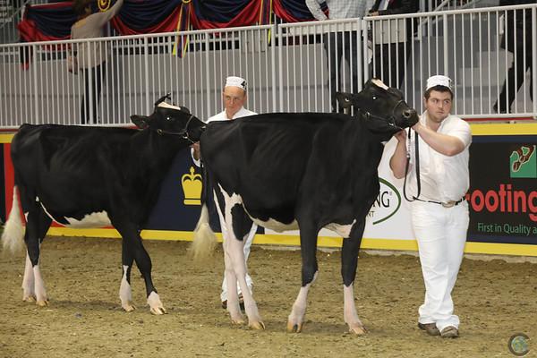 Royal16_Holstein_1M9A9884