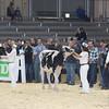 Royal16_Holstein_L32A3737