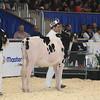 Royal16_Holstein_L32A3659