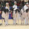 Royal16_Holstein_L32A3579