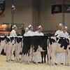 Royal16_Holstein_L32A3585