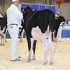 Royal16_Holstein_L32A3621