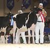 Royal16_Holstein_L32A3796