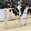Royal16_Holstein_L32A3554
