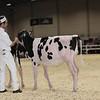 Royal16_Holstein_1M9A9516
