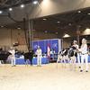Royal16_Holstein_1M9A9542