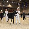 Royal16_Holstein_1M9A9564