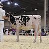 Royal16_Holstein_1M9A9504