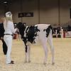 Royal16_Holstein_1M9A9508