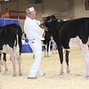 Royal16_Holstein_L32A3638