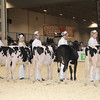 Royal16_Holstein_1M9A9528