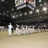 Royal16_Holstein_1M9A9832