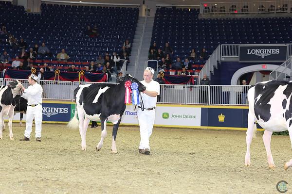 Royal16_Holstein_L32A3865