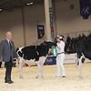 Royal16_Holstein_1M9A9683