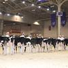 Royal16_Holstein_1M9A9592