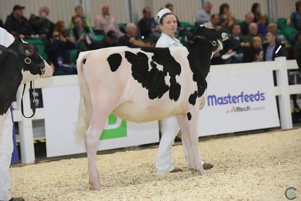 Royal16_Holstein_L32A3558