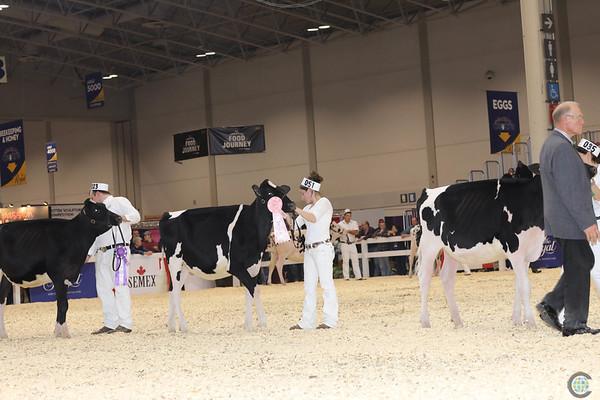 Royal16_Holstein_1M9A9684